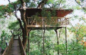 10 Best Tree Houses in India