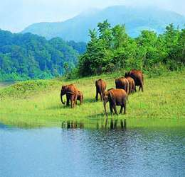 5 Unique Places to Spot Elephants in India