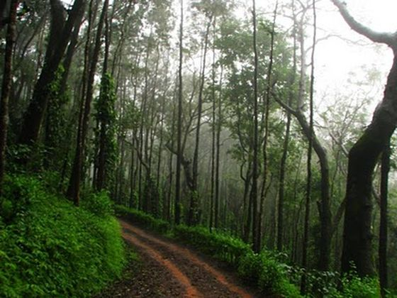 Bangalore Monsoon weekend getaways, Chikmagalur