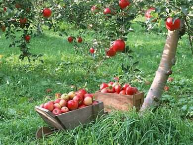 Take a trip to the Best Fruit Orchards in India