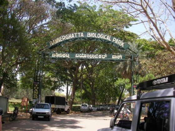 Things to do in Bangalore, bannerghatta-national-park