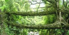 Unique Living Bridge of Cherrapunji, India