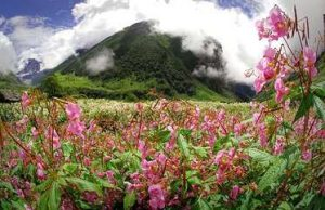 Valley of Flowers - The Kohinoor in the Himalayan Crown