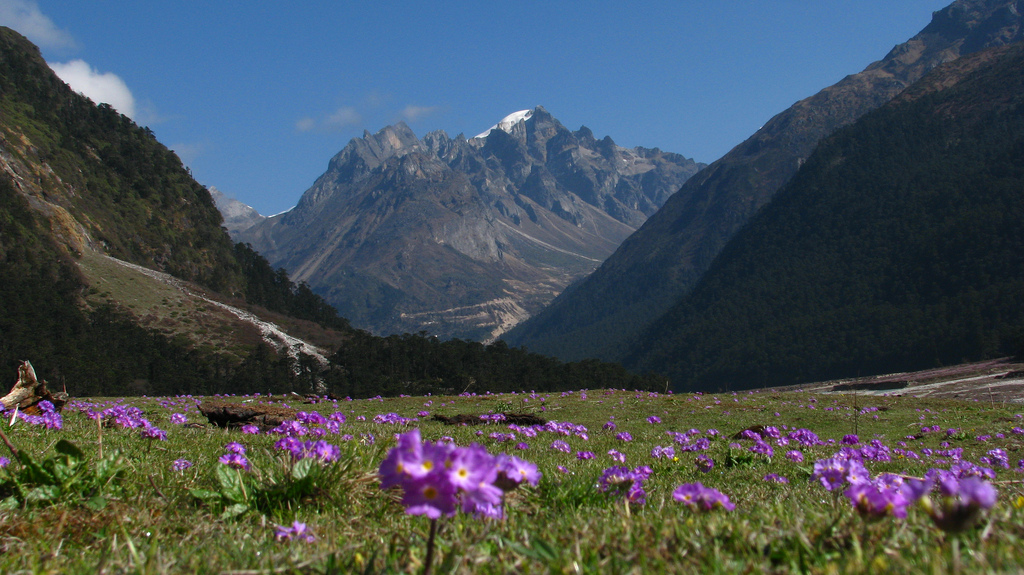 Yumthang-valley