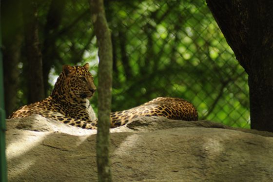 bangalore Weekend getaways, bannerghatta-national-park