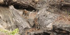 best_time_to_visit_Bandhavgarh-National-Park.jpg