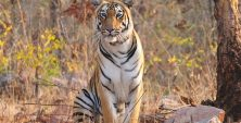 best_time_to_visit_Tadoba-National-Park.jpg