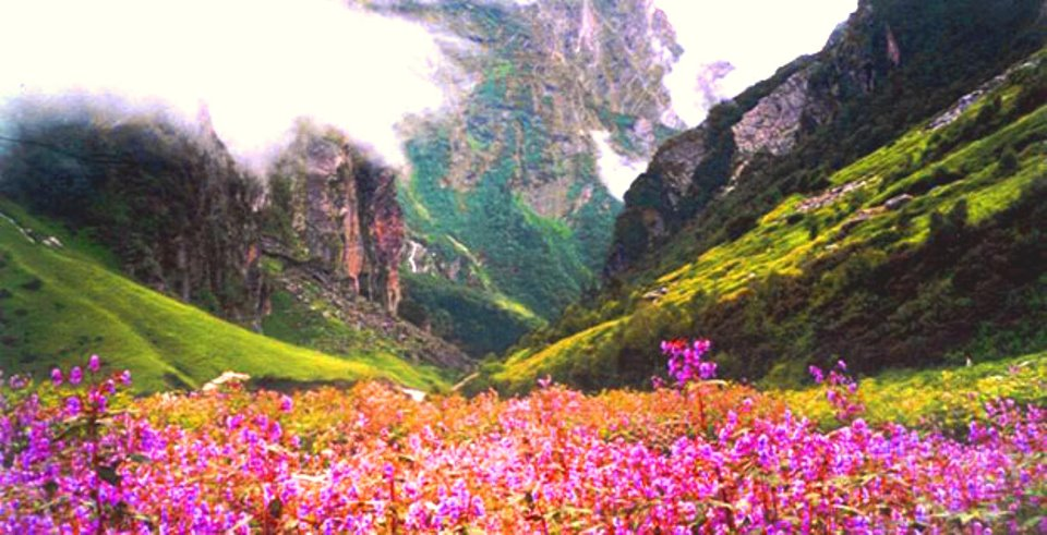 best_time_to_visit_Valley-of-Flowers.jpg