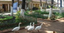 resort_golden-swan-beach-resort_in_murud-janjira_1156.jpg