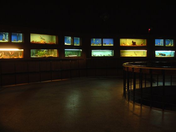 things to do in Bangalore, Bangalore-Aquarium