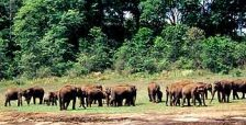 wildlife-sanctuaries-of-India